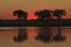 Trees, Sunrise (mclcbooks) Tags: trees lake sunrise landscape dawn colorado silhouettes rockymountainarsenal lakeladora mygearandme