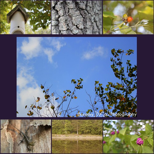 nature collage 2
