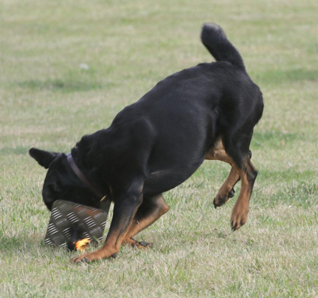 Dog Show Crix Hatfield Peverel