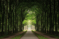 Forest (Reografie) Tags: trees tree green bomen groen forrest boom kasteel symmetrie slangenburg nibbie reografie fceuropoortsymmetrie