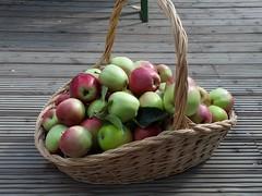 (Peleal) Tags: elma apfel gloster