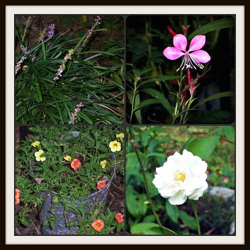 September Bloom Day