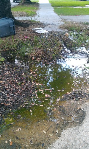 Carrollton Sidewalk Swamp
