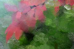 Durchblick, rot-grn (Werner Schnell Images (2.stream)) Tags: red green window leaves bltter glas werner ws schnell kreuztal rotgrn lokschuppen wernerschnell