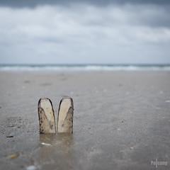 SOS - bunny - quicksand - ! (HdB1973) Tags: france rabbit bunny beach strand zeiss dof bokeh sony shell bretagne ears carl sos alpha plage lapin schelp fra coquille quicksand oreilles drijfzand sablesmouvants saintnic sal1680z variosonnar16803545za a580 minoltaamount geosetter garminetrexlegendhcx konijnenoren variosonnartdt35451680 variosonnartdt3545180