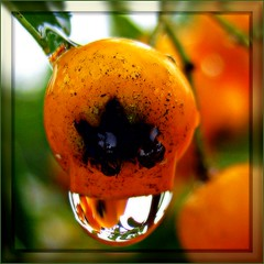 my drop of the day (© the-best-is-yet-to-come ©) Tags: waterdropsmacro abigfave anawesomeshot flickrdiamond waterdropsmacros ringexcellence blinkagain artistoftheyearlevel3
