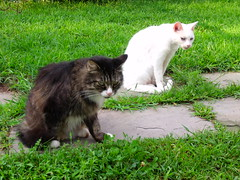 Mogs and Offspring! (The Eyes Of New York) Tags: family cats otto kitties yamamoto mogs moggies