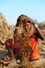 drying herbs (luca.gargano) Tags: africa travel kenya tribal adventure tribe kraal gargano turkana manyatta