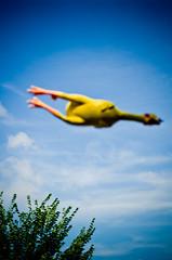 Airborne Rubber Chicken! (Kurayba) Tags: edmonton international fringe festival 2011 alberta canada fringeopolis busker buskers performer performers street performance pentax k5 wallycorp wally show da 55 f14 smcpda55mmf14sdm blurry out focus airborne rubber chicken air farce theatre