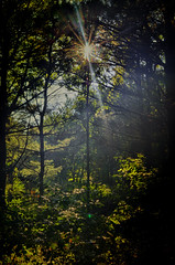 Sunburst - (5 Shot HDR - ND 4 stop filter) (J_Nipper) Tags: trees forest screw nikon post tripod filter nd sunburst rays 24mm processed hdr pp hdri manfrotto bogen 4stop d7000