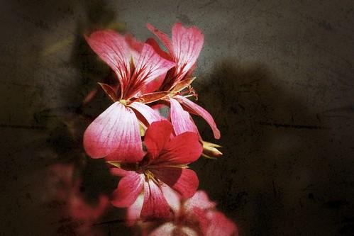 Fotografie: Vintage Flower