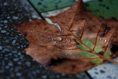 Leaf on a Table by Brian E Mitchell