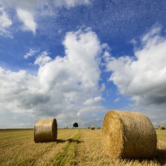 the harvest is done (pierre hanquin) Tags: blue sky cloud color tree nature colors yellow clouds landscape geotagged nikon europa europe colours belgium belgique pierre couleurs bleu ciel blau nuages paysage landschaft arbre lige wallonie 1685 hannut d7000 1685mmf3556gvr magicunicornverybest magicunicornmasterpiece hanquin