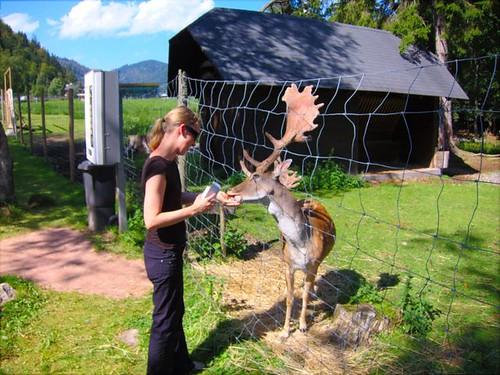 Feeding Deer by Danalynn C