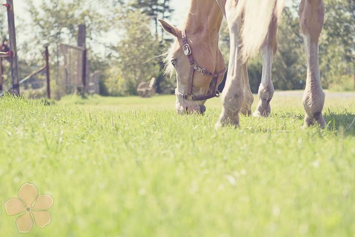 Halifax NS Wedding Portrait Horse Equine photography - Splash & Donna - Nicole Payzant -  (1 of 26)