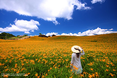 (nodie26) Tags: life portrait people flower girl beautiful landscape lily taiwan    hualien       yellower