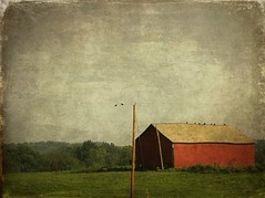 Where Cicadas Sing (raewillow) Tags: summer barn rural august textures brendastarr thankyouforsharing ohiobackroads skeletalmess sbfmasterpiece sbfgrandmaster hotdayscoolevenings afewgoodbirds