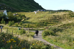 2009-07-25 004 Bull on the Road (martyn jenkins) Tags: eigg