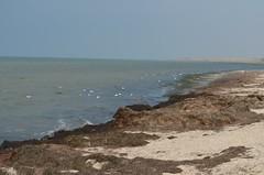 dsc_3070.jpg (Sanja Byelkin) Tags: sky plants bird seaocean oleksandrbyelkin visittocrimea2011summer steregushee