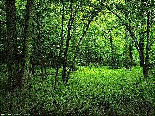 bosque-blog