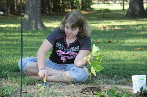 planting sycamore seedlings (7)