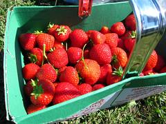 pyo035strawberries