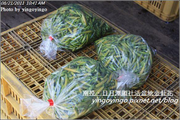 南投魚池_頭社活盆地金針花20110821_I1298