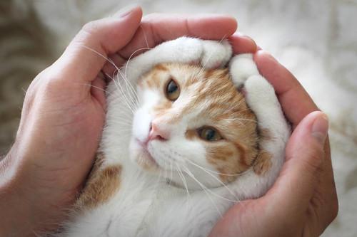 [フリー画像] 動物, 哺乳類, 猫・ネコ, 201109061100