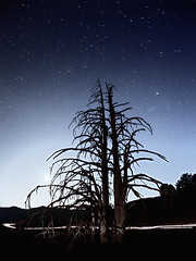 This (ChrisBrn) Tags: trees sky moon night stars dead moonlight cartrails