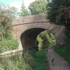 Holbrook Bridge Grand Western Canal Mid Devon (Bridgemarker Tim) Tags: dogs canals paths tivertonbasin devonbridges
