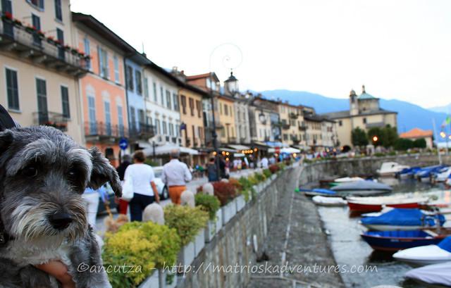 foto viaggi con il cane a cannobio sul algo maggiore piemonte italia