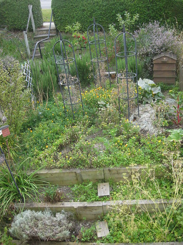 Veg bed 2 Sept 2011