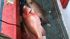 20100520 (fymac@live.com) Tags: mackerel fishing redsnapper shimano pancing angling daiwa tenggiri sarawaktourism sarawakfishing malaysiafishing borneotour malaysiaangling jiggingmaster
