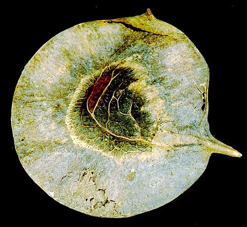 semente  by fernanda garrido