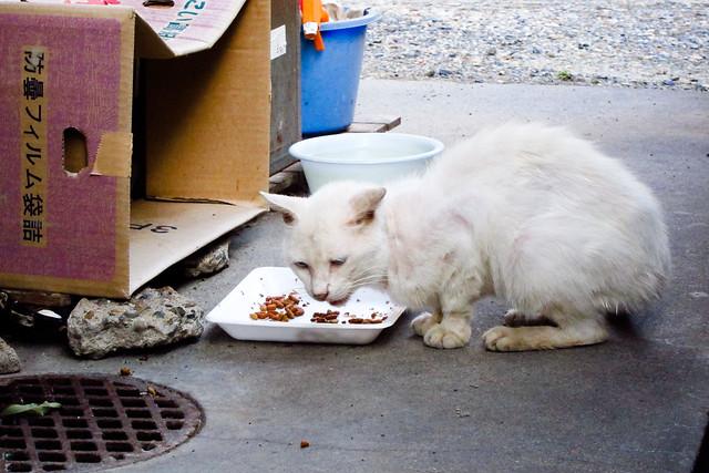 Today's Cat@2011-09-07