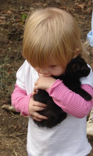 Kittens Pic 4