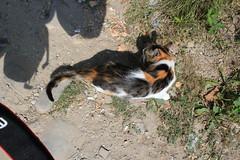 DES CHATS TRAINENT (bernadetteetroussi) Tags: village bulgaria maison balkan bulgarie    bojentsi