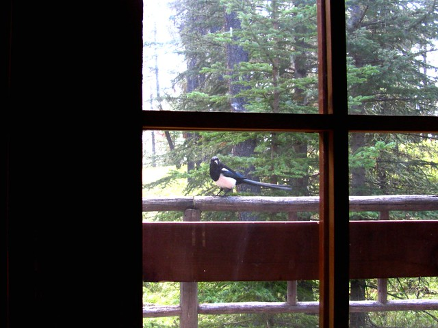 Hello, magpie.
