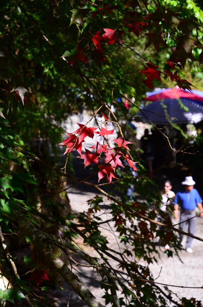 杉林溪一日遊