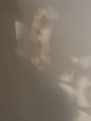 light (the incredible how (intermitten.t)) Tags: light shadow wall video image text cardiff exhibition caerdydd sound visual spokenword printedword writtenword arddangosfa 22534 photovisual universityoffalmouth milkwoodgallery performancewriting maperformancewriting 01092011