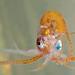 octopus___copyright_sarah_gotheil_