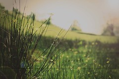 too long?! (m a r c u s : g a r r e t t) Tags: travel flowers trees sun grass spring lomo haze weekend sunny fields treeline thelakes lowsun buttercups longgrass marcusgarrett