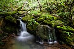 Naturaleza viva (Jose Casielles) Tags: naturaleza musgo ro agua len viva rocas gera yecla frescor hayedo faedo vildoso fotografasjcasielles