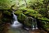 Naturaleza viva (Jose Casielles) Tags: naturaleza musgo río agua león viva rocas gera yecla frescor hayedo faedo vildoso fotografíasjcasielles
