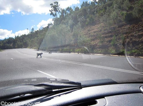 Why did the baboon cross the road?