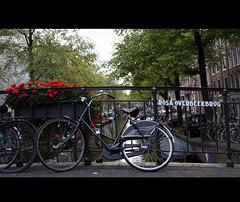 Rosa Overbeekbrug (Iam Marjon Bleeker) Tags: bridge holland amsterdam bike bicycle canal geraniums jordaan bloemgracht stadsarchief 2eleliedwarsstraat
