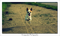 Vintage (Xavographe) Tags: pink chien brown white green rose vintage vert course ciel promenade terre vol animaux marron blanc chemin langue petit herbe dehors poils domestique courir canids