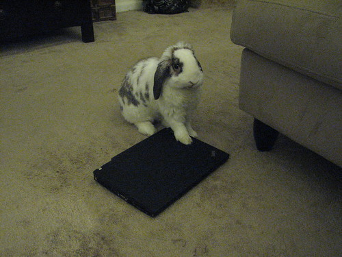 betsy examining laptop
