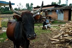 (camera_rwanda) Tags: poverty africa food clothing education orphanage rwanda future medicine care shelter economics tuition possibility childrensrights childrights camerarwanda nyundo noelorphanage thepointfoundation improvinglives