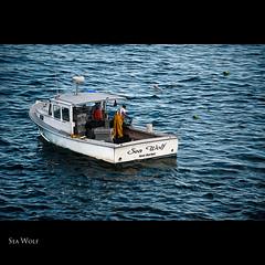 Sea Wolf (Merilee Phillips Offline) Tags: fisherman nikon maine lobster ie legacy shining atlanticocean barharbor acadianationalpark lobsterpot parklooproad blueribbonwinner dockbay coth platinumphoto d700 magicunicornverybest sbfmasterpiece sbfgrandmaster lobsternmen gulfofatlanticocean